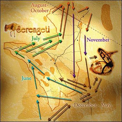Serengeti Wildebeest Migration Map